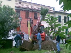 """I giardinieri del Comune """"piantano"""" la nuova palma"""